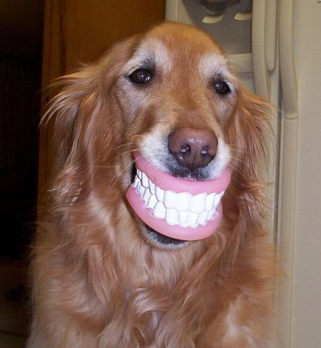 happy birthday funny dog. Funny Teeth