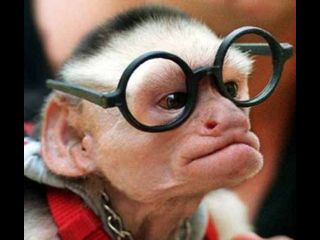 monkey-with-funny-glasses_larry-king_thumb.jpg