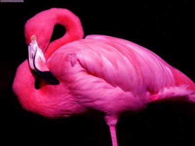 half flamingo half human