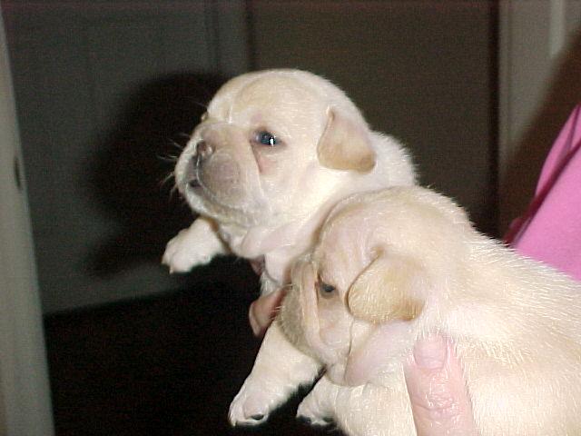 Animalebrities How To Shun My French Bulldog Being Jealous Of My