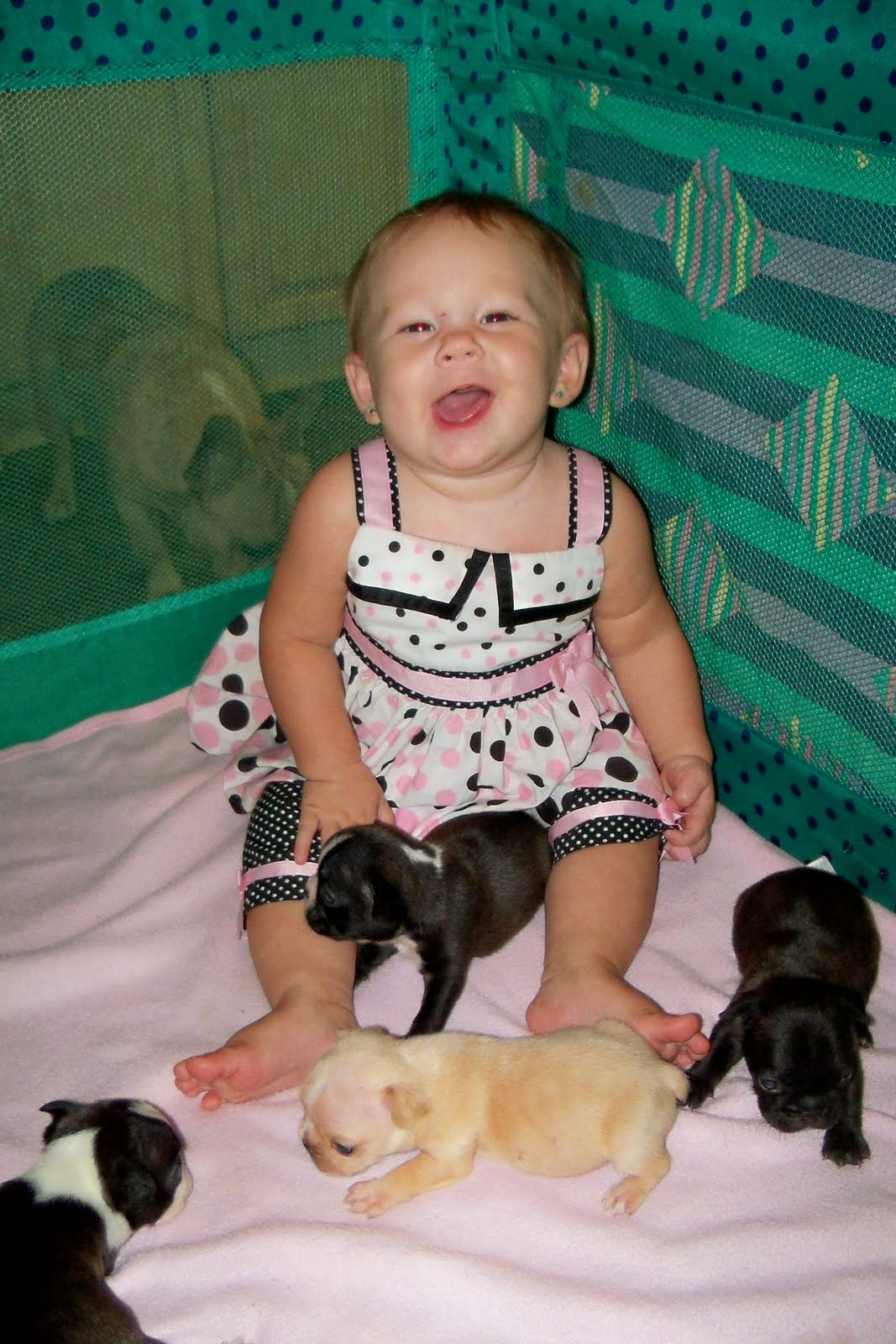 French Bulldog Puppies and their interface with your baby!!
