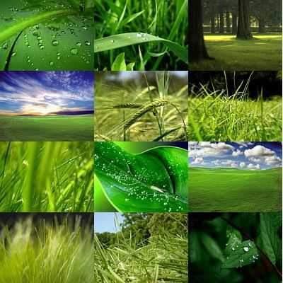 wallpaper para windows vista. Wallpapers ecologicos.