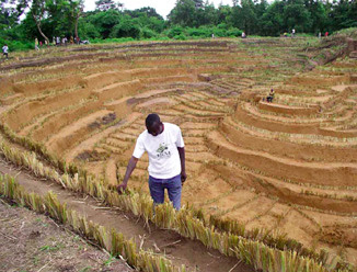 Smellyblog decoding obscure notes part vii vetiver for Soil erosion in hindi