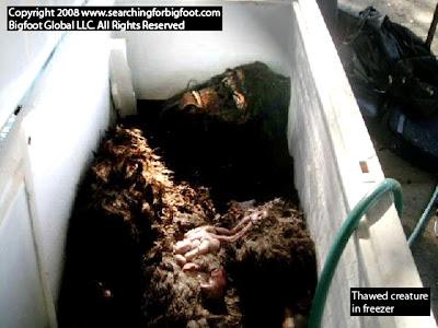 http://3.bp.blogspot.com/_CROmZlwZYP0/SKMJZgXD1II/AAAAAAAAC0A/-pMwtn9_NqI/s400/thawed-creature-in-freezer11.jpg