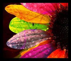 Bunga Pelangi Hati