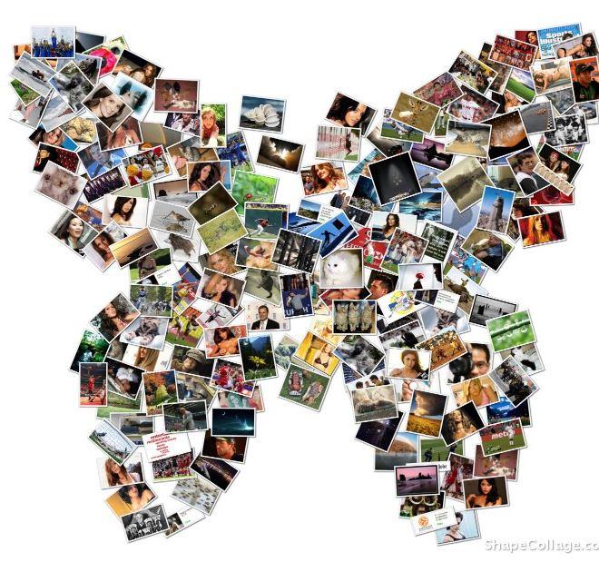 patchwork papillon de photo