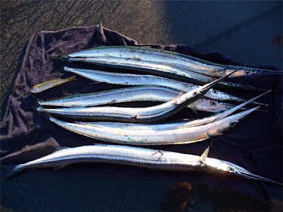 Рыба Средиземноморья