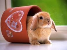 ¿Por qué los conejos y no otras mascotas?