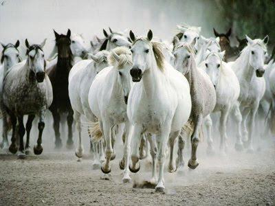 Compiladito de humor pepe2982 febrero 2011 Manada_de_caballos