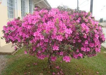 As flores são o elo de ligação do Céu com a Terra