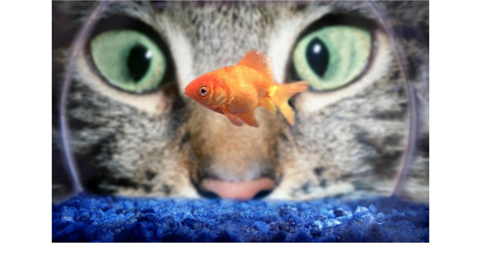 известные девушки со знаком зодиака рыбы