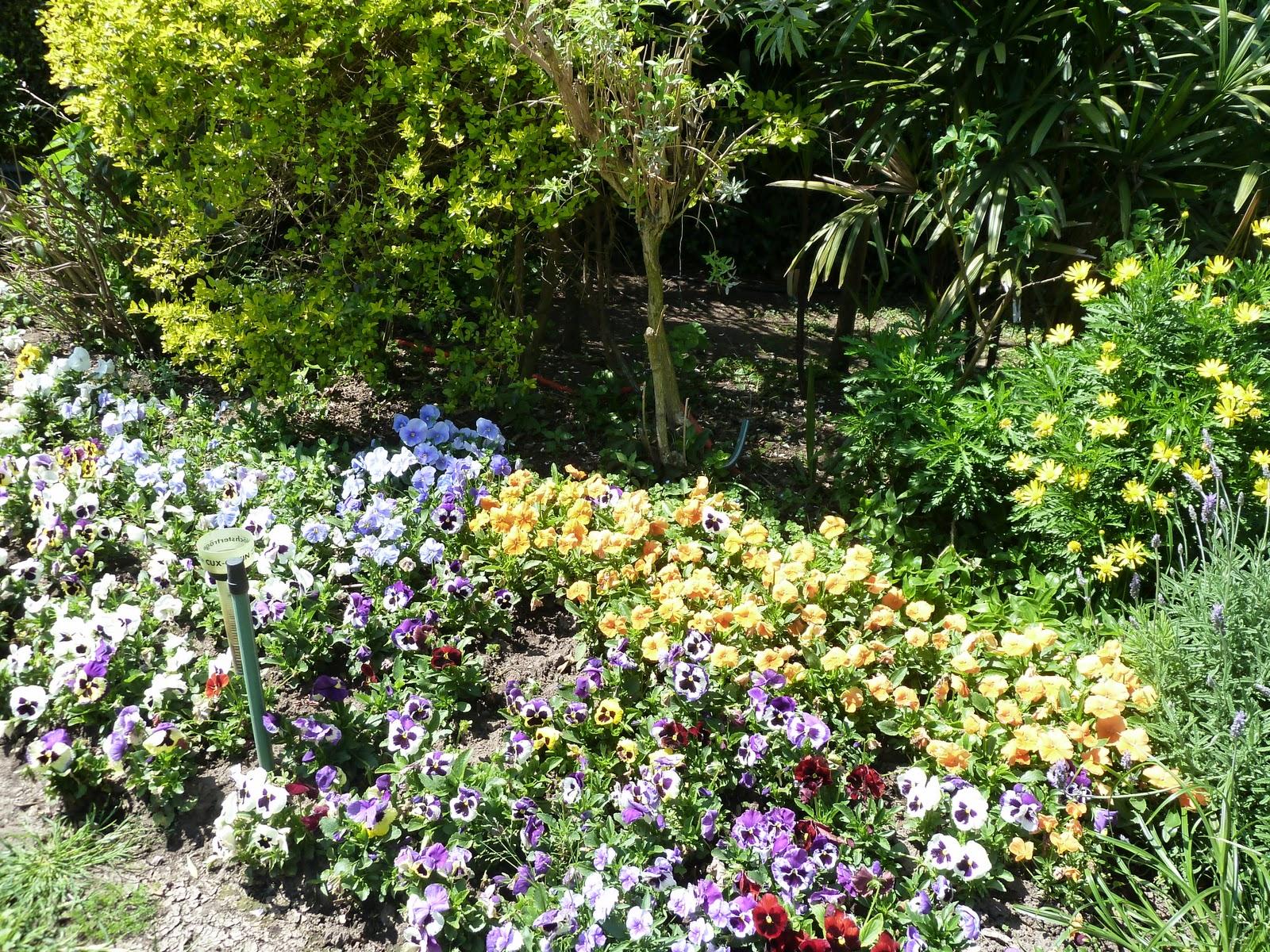 Los invito a pasear por mi jard n arriate cantero - Arriate jardin ...