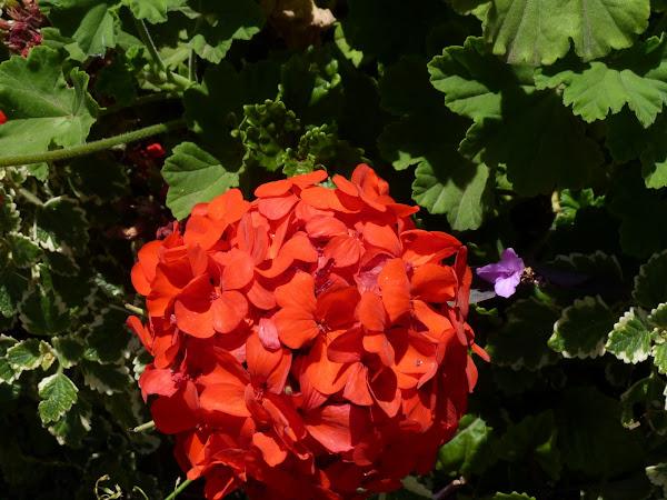 Jardines de floraci�n prolongada