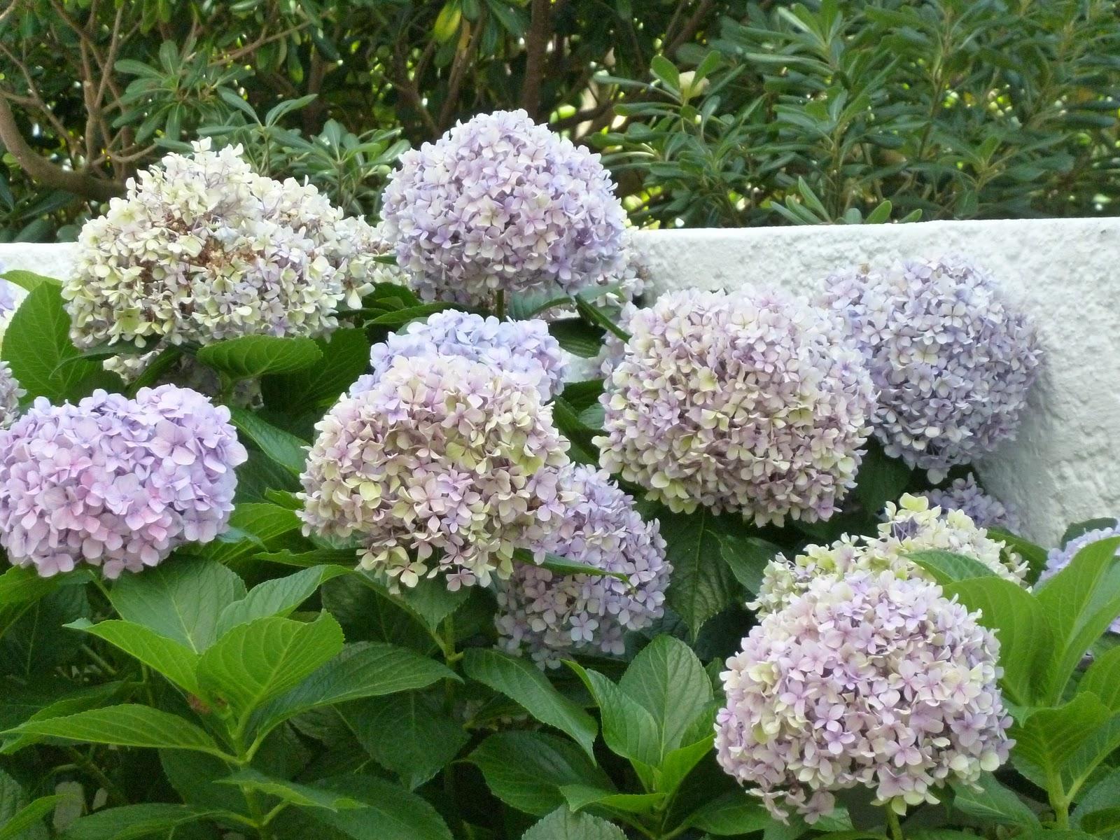 Plantas adecuadas seg n su orientaci n en el balc n los - Plantas de balcon ...