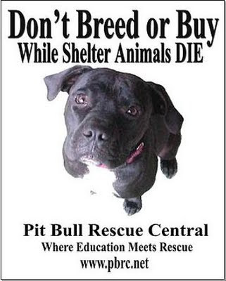 The Truth About Pit Bulls: ADOPT a Shelter Dog!