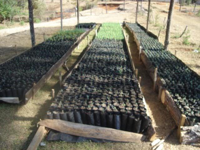 Produccion de arboles forestales tipo de bolsa para los for Plan de negocios de un vivero de plantas