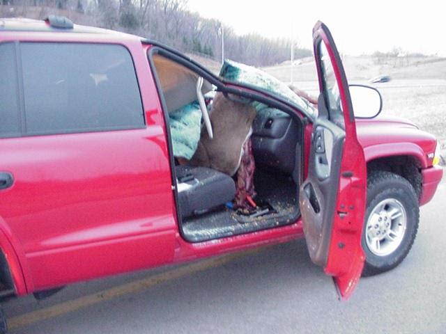 Feeder Car Crash