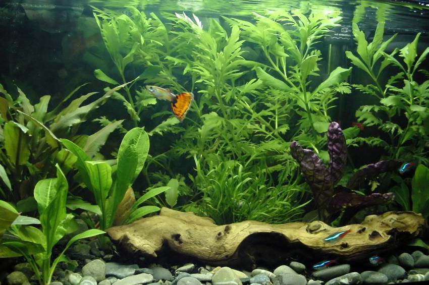 information for your pet: Aquarium Care