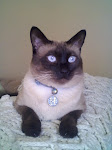 My Sweet Siamese Hurley