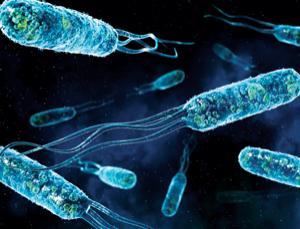 Японские ученые подтвердили существование питающихся электричеством бактерий