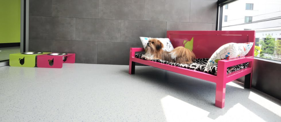 scruffy dogs sniff dog hotel dog hotel 980x425