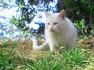 El gato blogger plantas t xicas para tu gato Plantas seguras para gatos