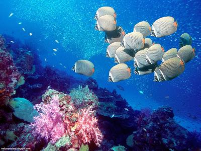 Underwater Creatures Desktop Wallpapers And Photos