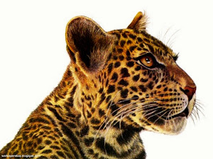 Leopard-Art-Francien-wall-1280x960-TR Images, Picture, Photos, Wallpapers