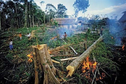 destruction of natural resources essay