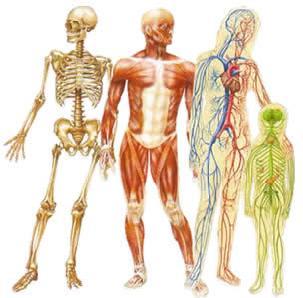 Les syst mes et appareils du corps humain mise en situation - Sensation de froid interieur du corps ...
