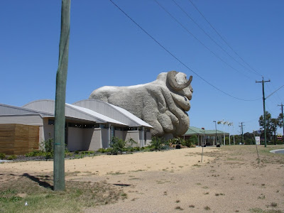 Big Merino side shot