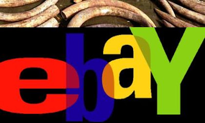 eBay Bans Ivory