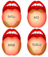 Dil ve Dilin Acı Tatlı Tuzlu ve Ekşi Algılayan Kısımları