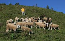 Criação de Ovinos