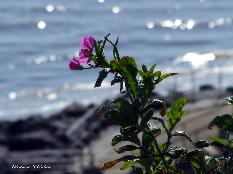 flower on the seaside