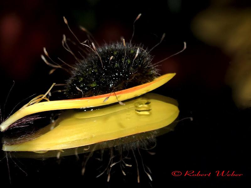 tiny moss
