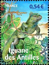 L'Iguane d'Antilles