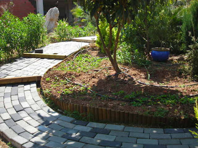 El jard n de sa possessi arriate del nisperero for Arriate jardin