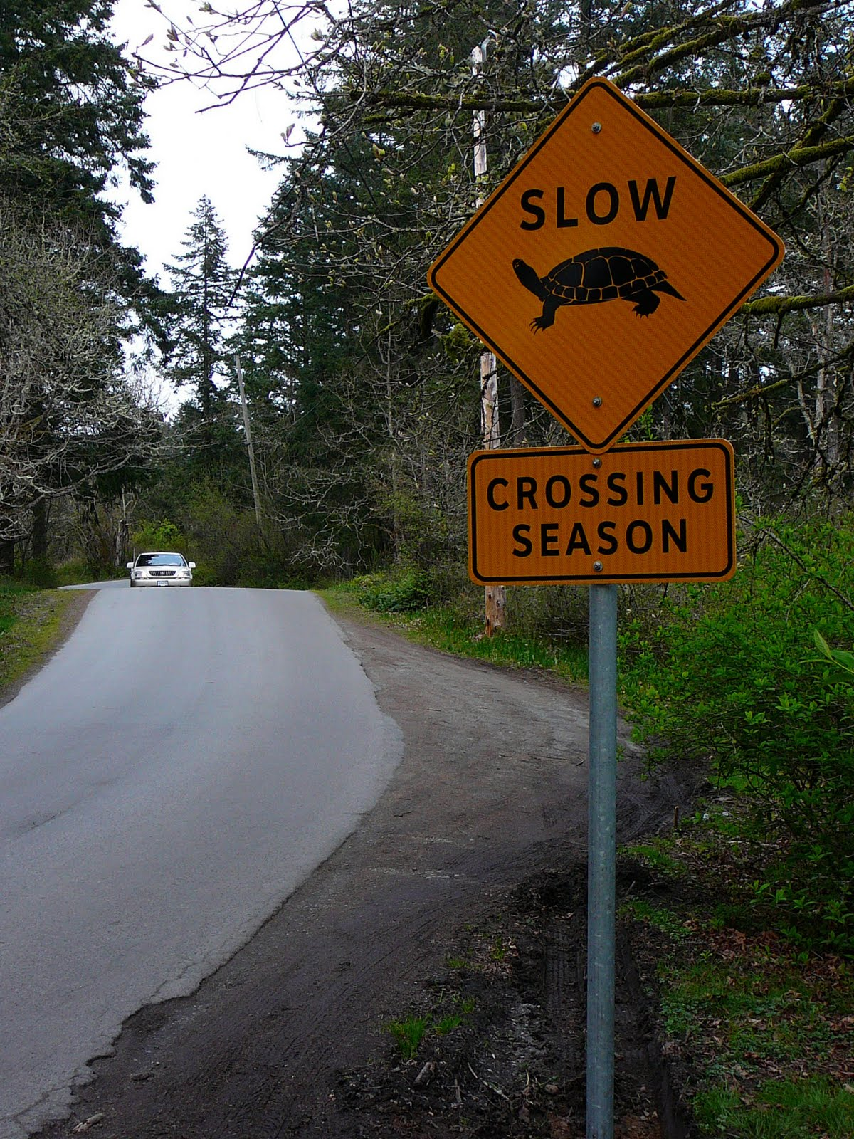 Slow Turtle Crossing >> Tom Hawthorn S Blog Caution Turtle Crossing