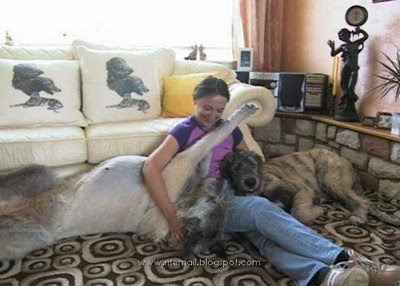 Worlds Biggest Dogs