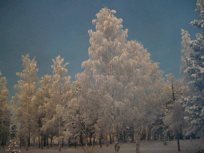 Vintervy- Ängeså