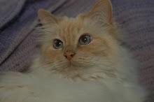 Min underbara katt