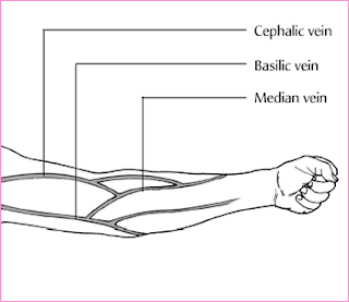 Metacarpal plexus Dorsal venous arch