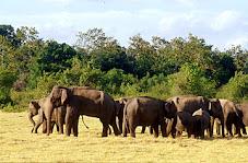 Uda Walawe Wild Life Sanctuary, Sri Lanka
