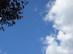 árvore céu nuvem