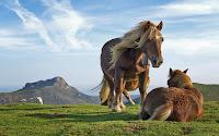 papel de parede cavalos no campo