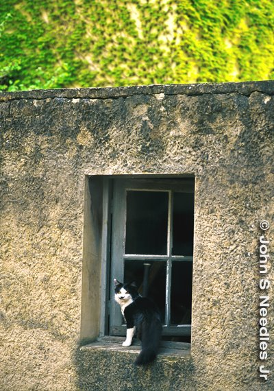 2_CAT IN WINDOWS SERIES_ France