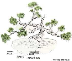 Strange Alert Method Of Create Bonsai Wiring Database Scataclesi4X4Andersnl