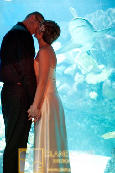 shark wedding photos, aquarium wedding photography