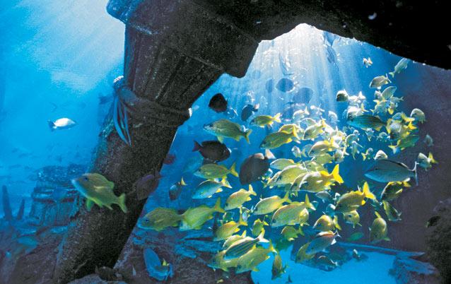 UNDERSEA CITY   Buscar con Google   ATLANTIS RISING   Pinterest   Underwater   Underwater city and Ruins. UNDERSEA CITY   Buscar con Google   ATLANTIS RISING   Pinterest